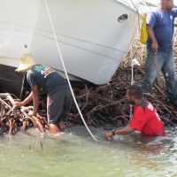 Vessel laying on top of mangroves; one worker in the water one on land next to boat.