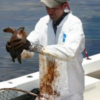 A man in a white coat on a boat holding an oiled sea turtle.