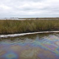 An oil sheen in a marsh with pollution sorbent around it.