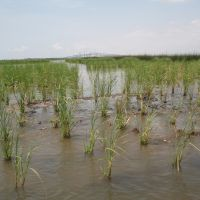 Photo: Restored wetland in Port Arthur, Texas.