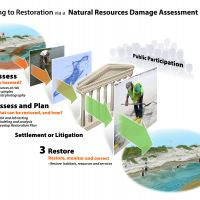 Process diagram of steps taken to achieve restoration.