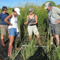 Group of four people standing in a marsh.