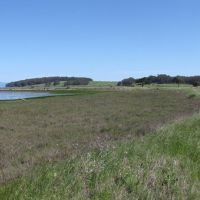 Degraded marsh area on edge of bay.