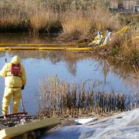 Cleanup workers scoop oil out of a marsh with containment boom at the edges.