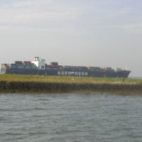 Pelicans and oiled marsh in front of the container ship M/V Everreach in 2002.