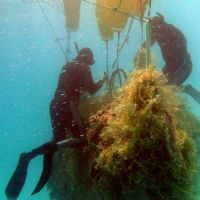 Photo: Divers gather abandoned fishing nets left at sea.