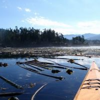 Front of a kayak pushing through floating wood in the Strait of Juan de Fuca.
