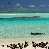A young monk seal and birds on the beach of French Frigate Shoals.