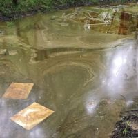 Sorbent pads soaking up orange oil on the surface of a creek.