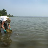 Scientist samples sediments after PEPCO spill.