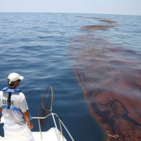A man looking off the end of a boat at oiled sargassum.
