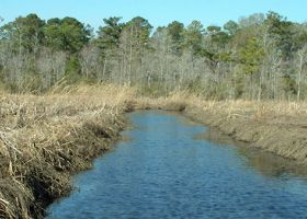 Body of water with vegetation on both banks.