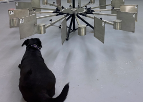 A dog studying a multi-armed training device.