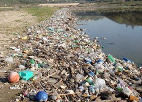 Marine debris at the edge of a body of water.