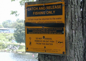 """Catch and release only"" warning sign posted on a tree."