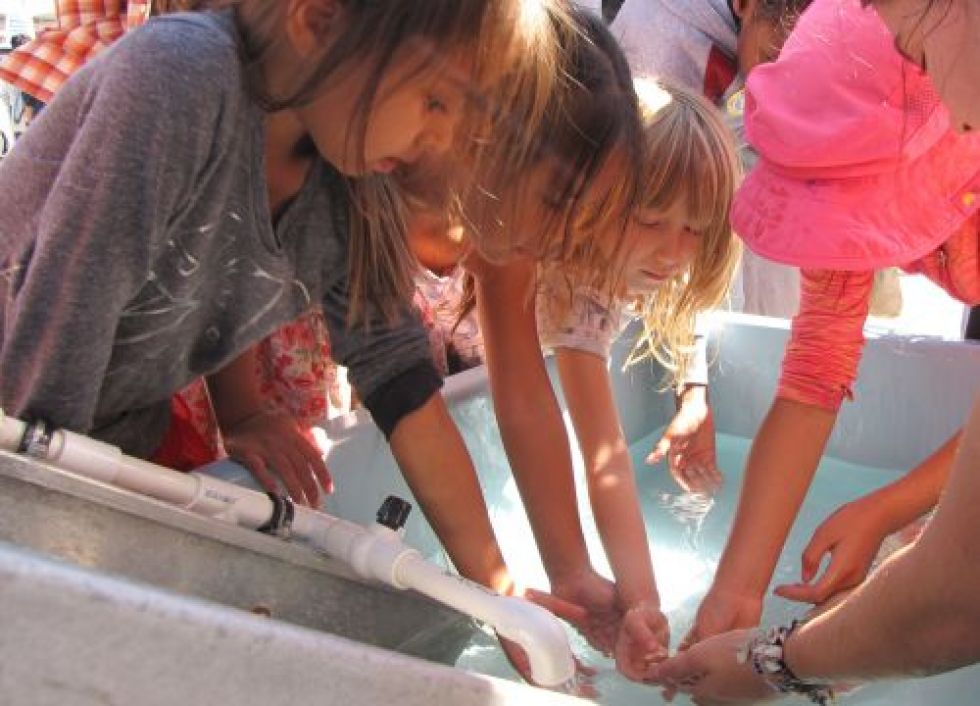 Children and an adult touch something in water.