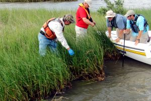 Several people in a boat looking at a marsh area that two people on land are pointing to.