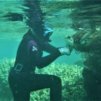 A diver removing a sea turtle from a marine net.