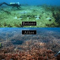 Before and after images of coral restoration.