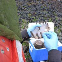 Hands holding sampling equipment.