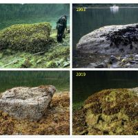 Four photos of a large rock, taken in 1991, 19193, 2008, and 2019.