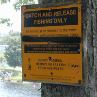 """""""Catch and release only"""" warning sign posted on a tree."""