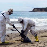 Two cleanup crew members gathering spilled oil on Refugio State Beach, California in 2015.