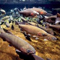 Fish swimming underwater.