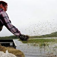 A person on a boat throwing handfuls of rice into the water.