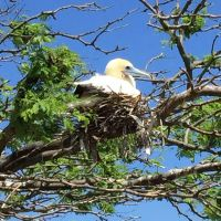White bird in a nest in a tree.