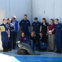 Group of people pose with a seal.