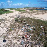 Beach with trash and seaweed.