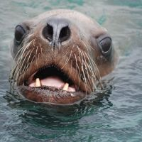 A seal in water.