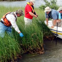 Two men in a boat and two men in a marsh getting samples.