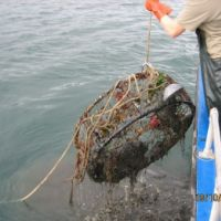 Crab pot being hauled onto a boat.