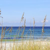 Beach grasses in front of the ocean.