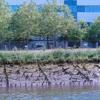 Riverbank being replanted, building in background.
