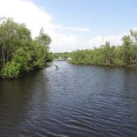 Creek and mangrove forest.