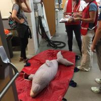 People surround stuffed dolphin laying on floor.