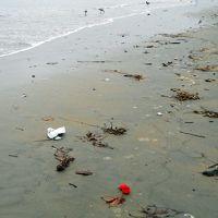 Litter at water's edge of an ocean beach.