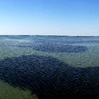 Seagrass beds under the surface of the water.