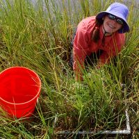 Woman in hat working in marshes.