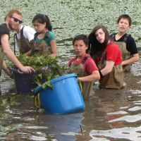 Group of children in water with bucket and vegetation.