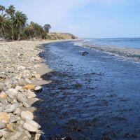 Oiled beach.