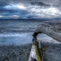 Driftwood on a beach, with water in background.