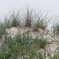 Sand dunes and dunes grass.