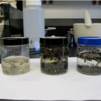 Three jars on a table containing microplastics in water.
