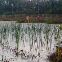 Image of restoration being done in a wetland.