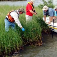 People in boat and marsh assess oil's impacts.