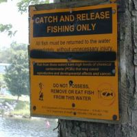 Catch and release fishing sign nailed to a tree by a river.
